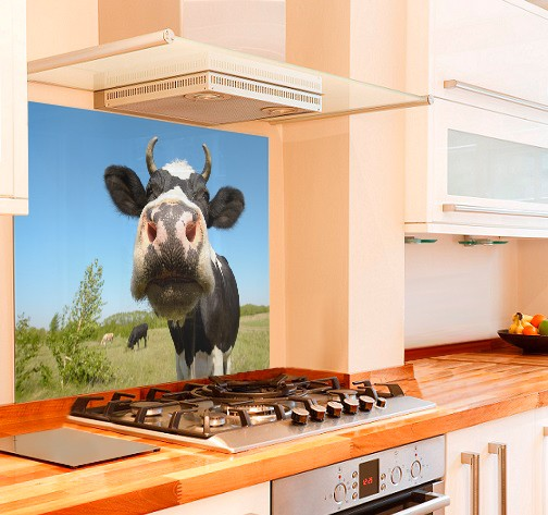 Moo Cow Glass Kitchen Splashback