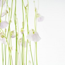 Delicate Floral sq diy kitchen glass splashback