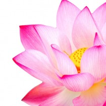 Pink Lotus diy kitchen glass splashback