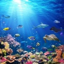 Tropical Water glass splashbacks