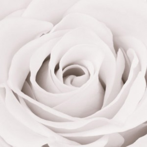 White Rose sq diy kitchen glass splashback