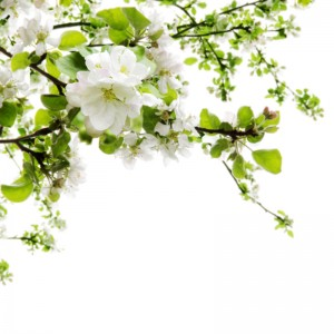 White Petals diy kitchen glass splashback
